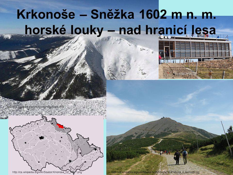 Krkonoše – Sněžka 1602 m n. m. horské louky – nad hranicí lesa