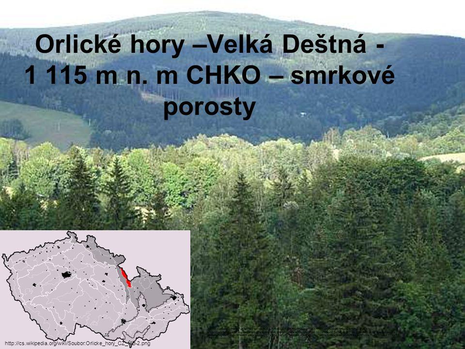 Orlické hory –Velká Deštná - 1 115 m n. m CHKO – smrkové porosty
