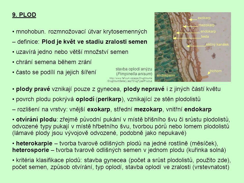 • mnohobun. rozmnožovací útvar krytosemenných