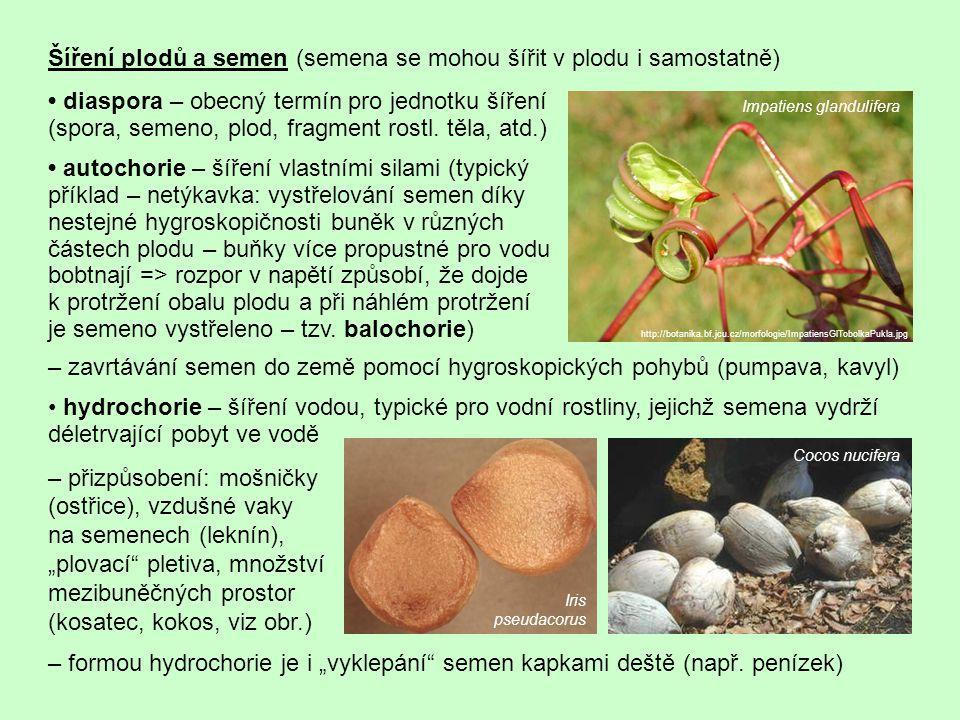 Šíření plodů a semen (semena se mohou šířit v plodu i samostatně)