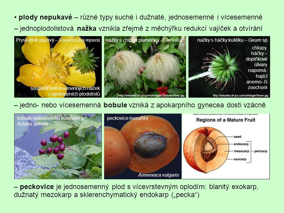 • plody nepukavé – různé typy suché i dužnaté, jednosemenné i vícesemenné