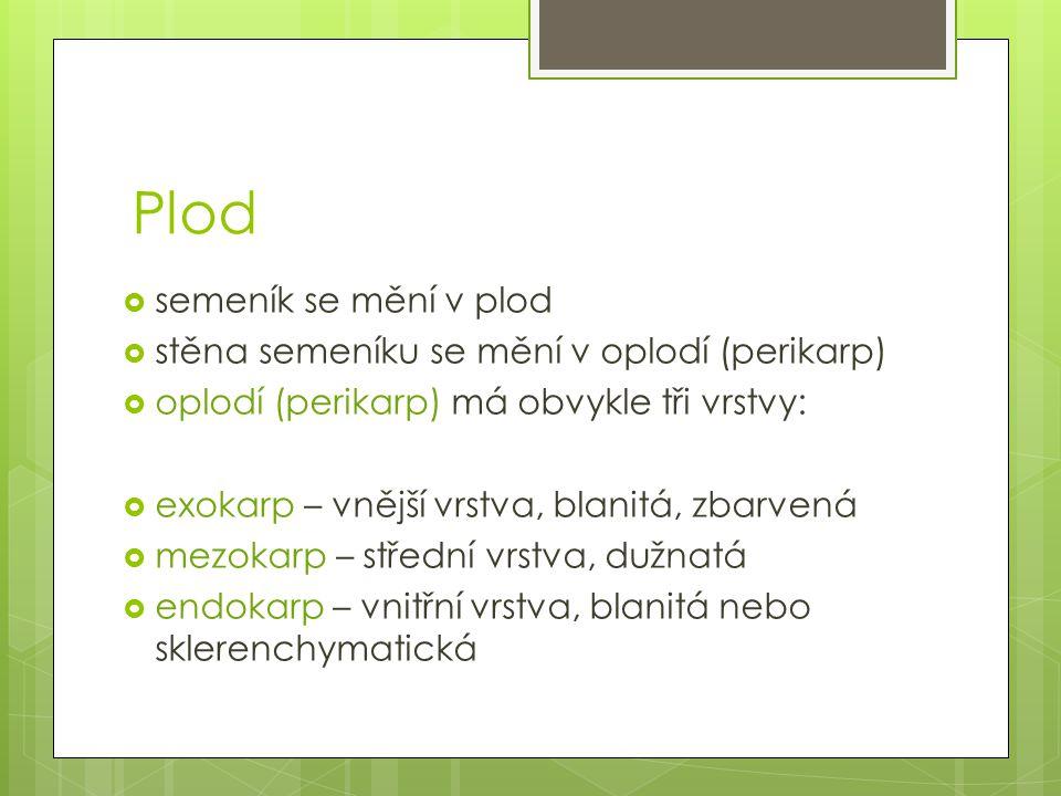 Plod semeník se mění v plod stěna semeníku se mění v oplodí (perikarp)