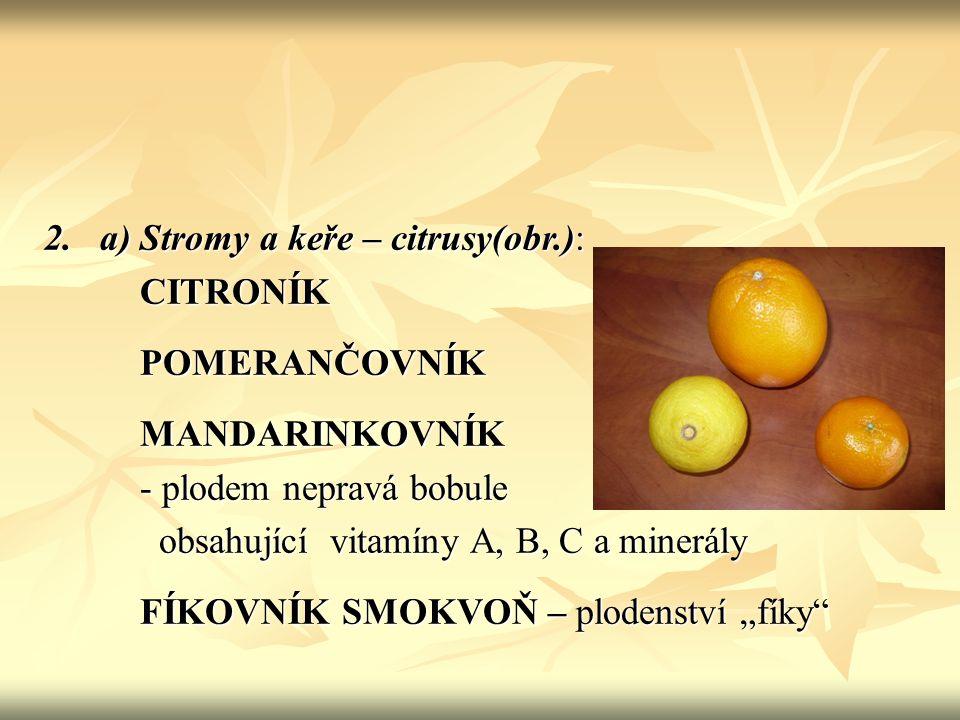2. a) Stromy a keře – citrusy(obr.):