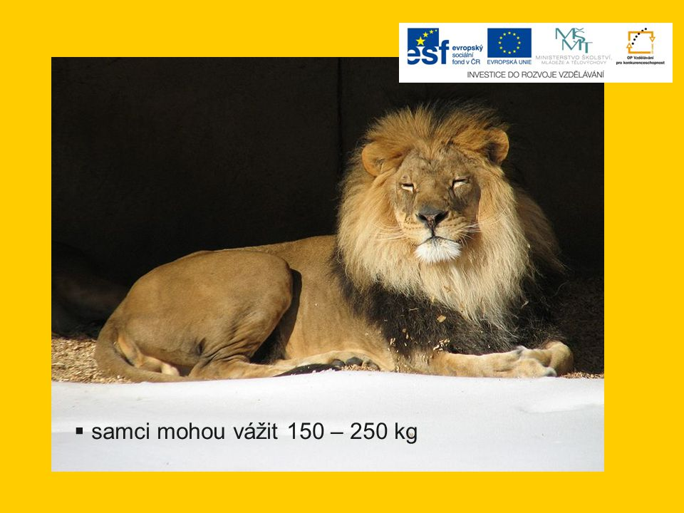 samci mohou vážit 150 – 250 kg