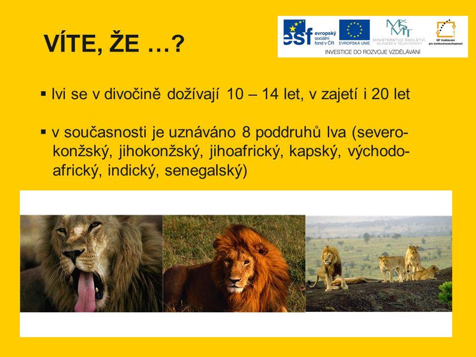 VÍTE, ŽE … lvi se v divočině dožívají 10 – 14 let, v zajetí i 20 let