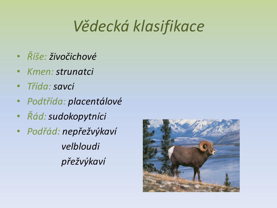 Vědecká klasifikace Říše: živočichové Kmen: strunatci Třída: savci