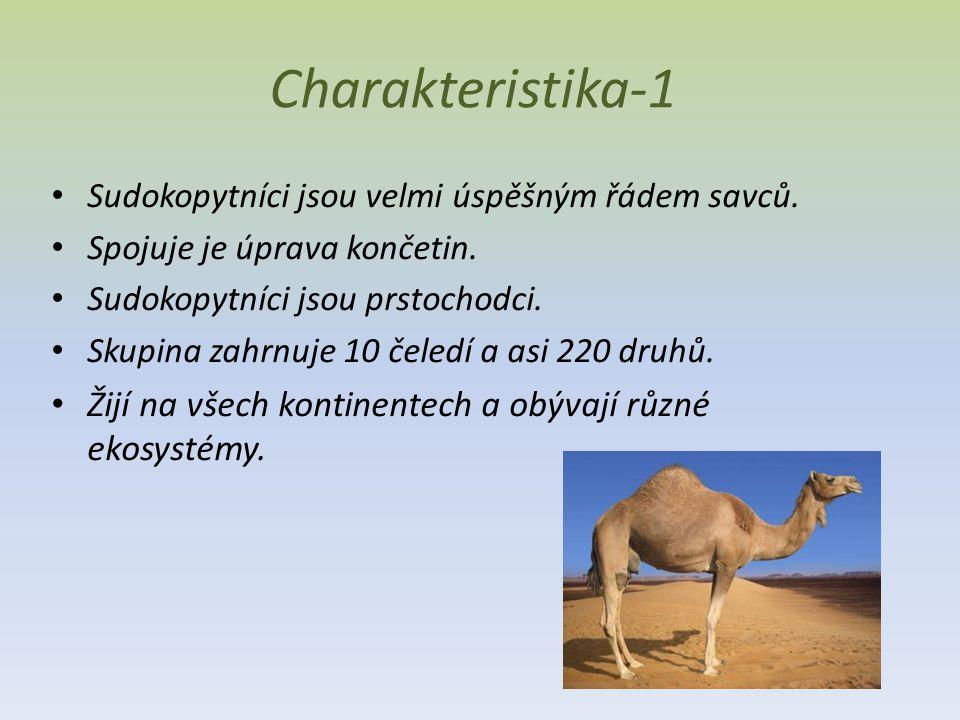 Charakteristika-1 Sudokopytníci jsou velmi úspěšným řádem savců. Spojuje je úprava končetin. Sudokopytníci jsou prstochodci.