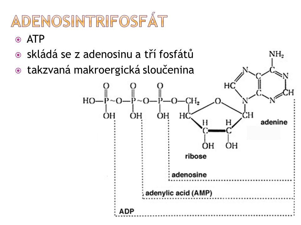 Adenosintrifosfát ATP skládá se z adenosinu a tří fosfátů