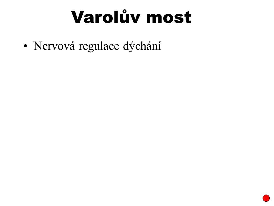 Varolův most Nervová regulace dýchání