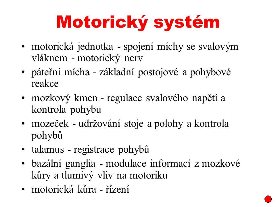 Motorický systém motorická jednotka - spojení míchy se svalovým vláknem - motorický nerv. páteřní mícha - základní postojové a pohybové reakce.
