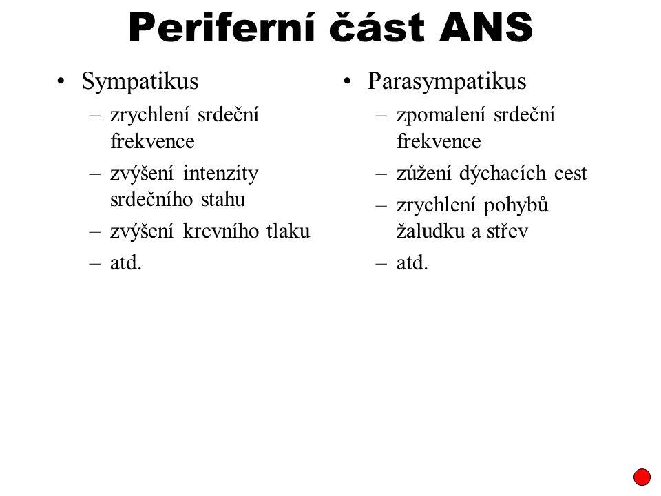Periferní část ANS Sympatikus Parasympatikus