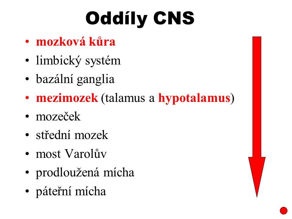 Oddíly CNS mozková kůra limbický systém bazální ganglia