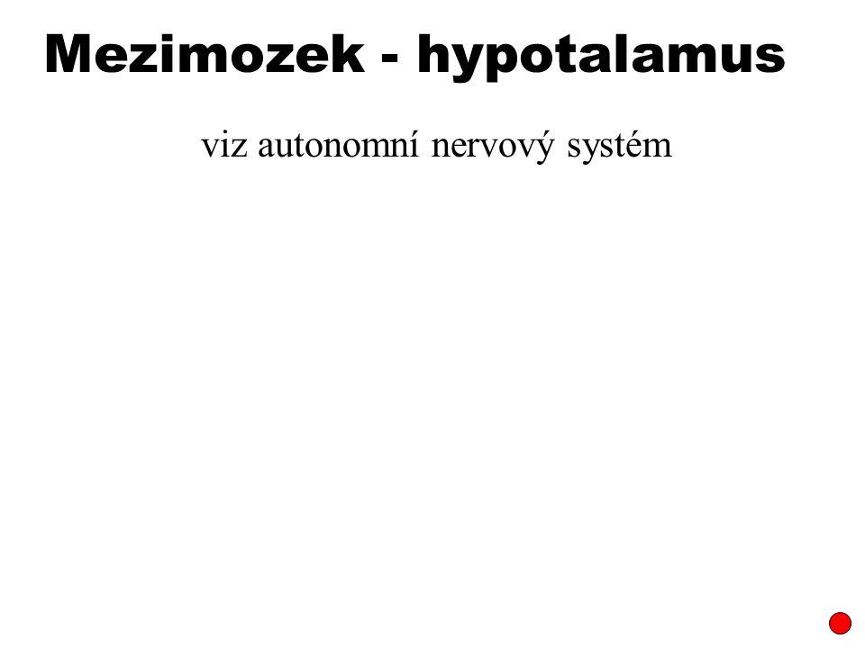 Mezimozek - hypotalamus