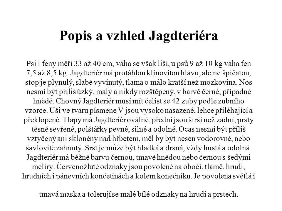 Popis a vzhled Jagdteriéra Psi i feny měří 33 až 40 cm, váha se však liší, u psů 9 až 10 kg váha fen 7,5 až 8,5 kg.