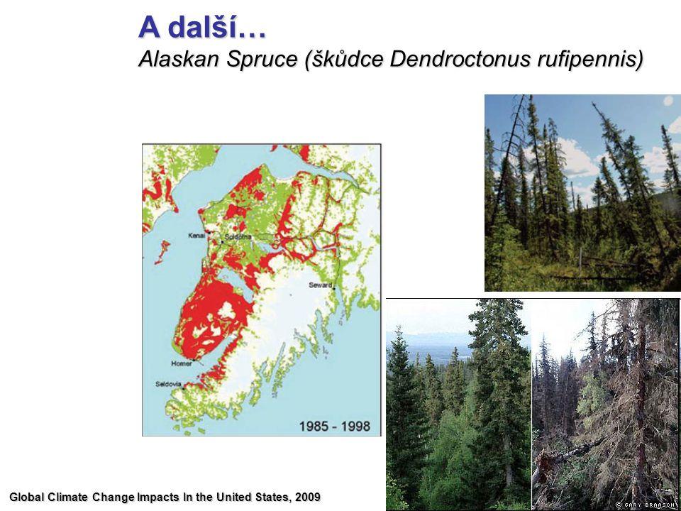 A další… Alaskan Spruce (škůdce Dendroctonus rufipennis)