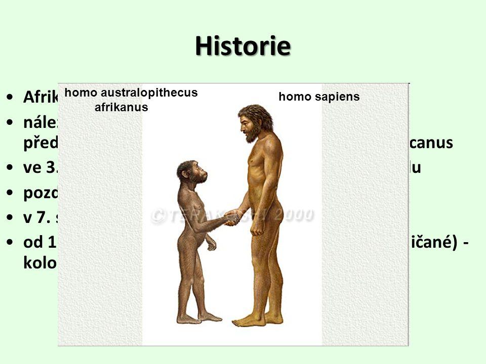 Historie Afrika - kolébka lidstva