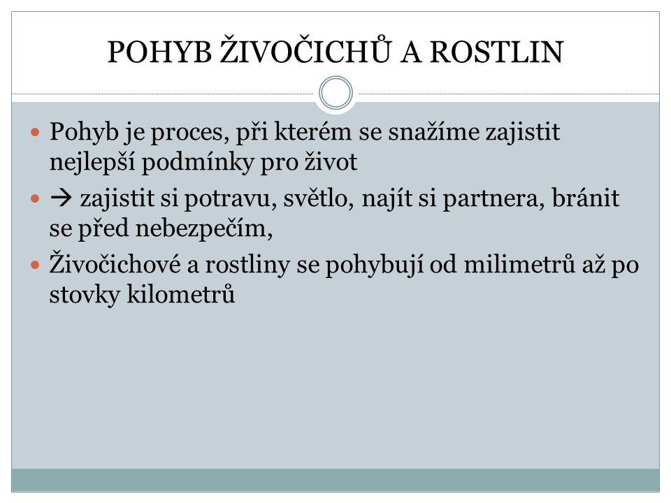 POHYB ŽIVOČICHŮ A ROSTLIN