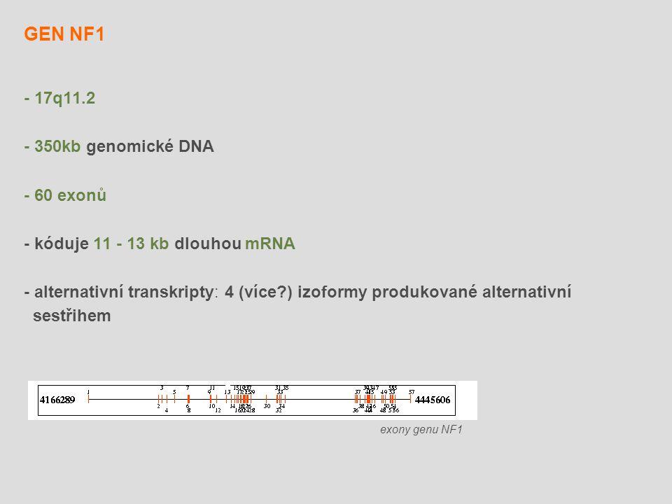 GEN NF1 - 17q11.2 - 350kb genomické DNA - 60 exonů