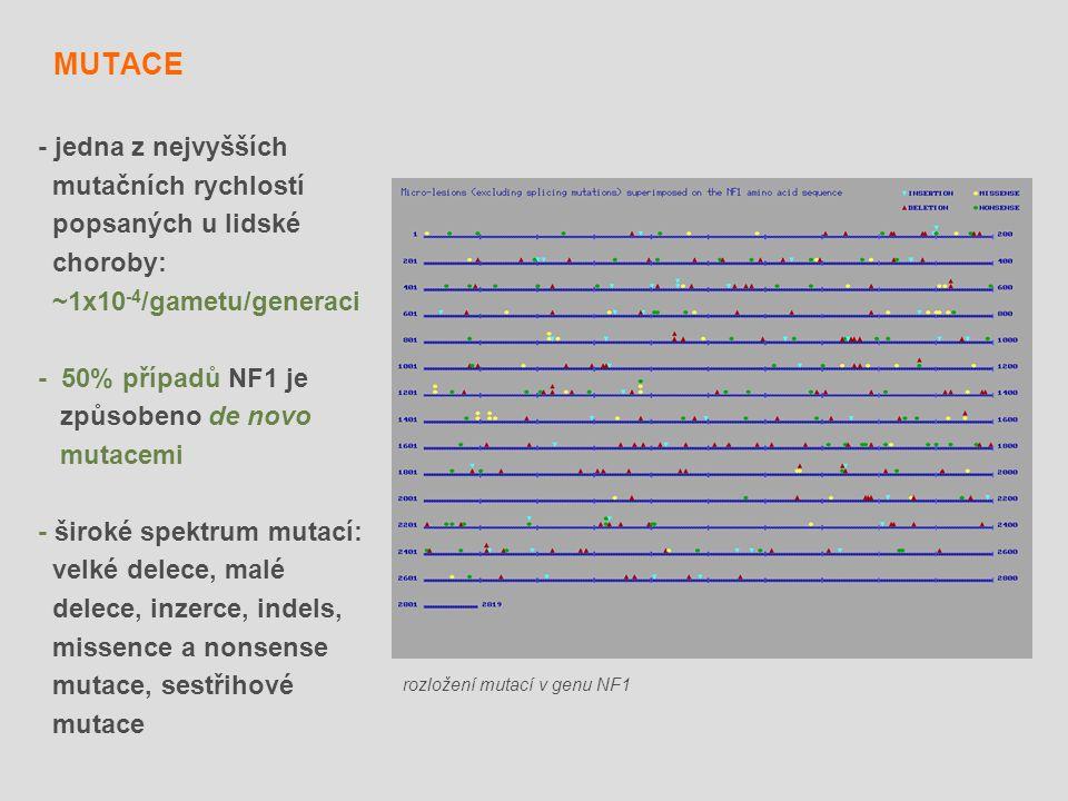 MUTACE - jedna z nejvyšších mutačních rychlostí popsaných u lidské
