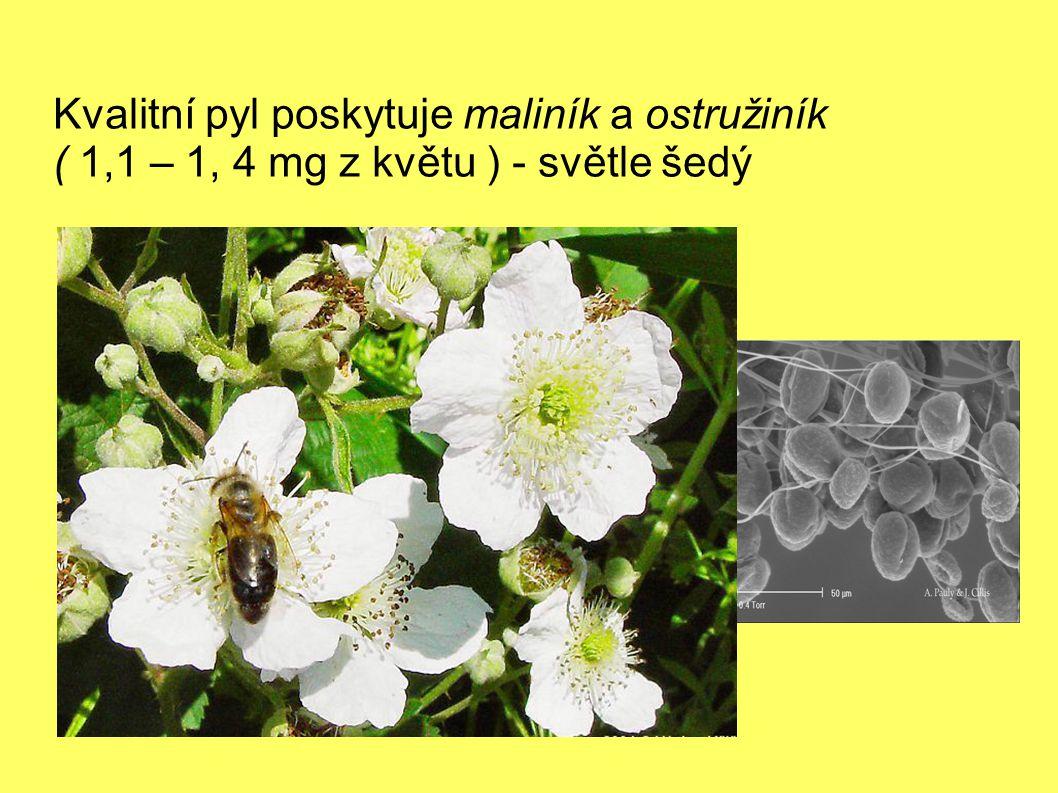 Kvalitní pyl poskytuje maliník a ostružiník