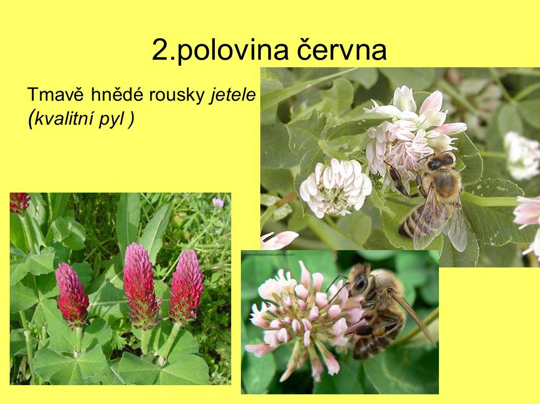 Tmavě hnědé rousky jetele (kvalitní pyl )