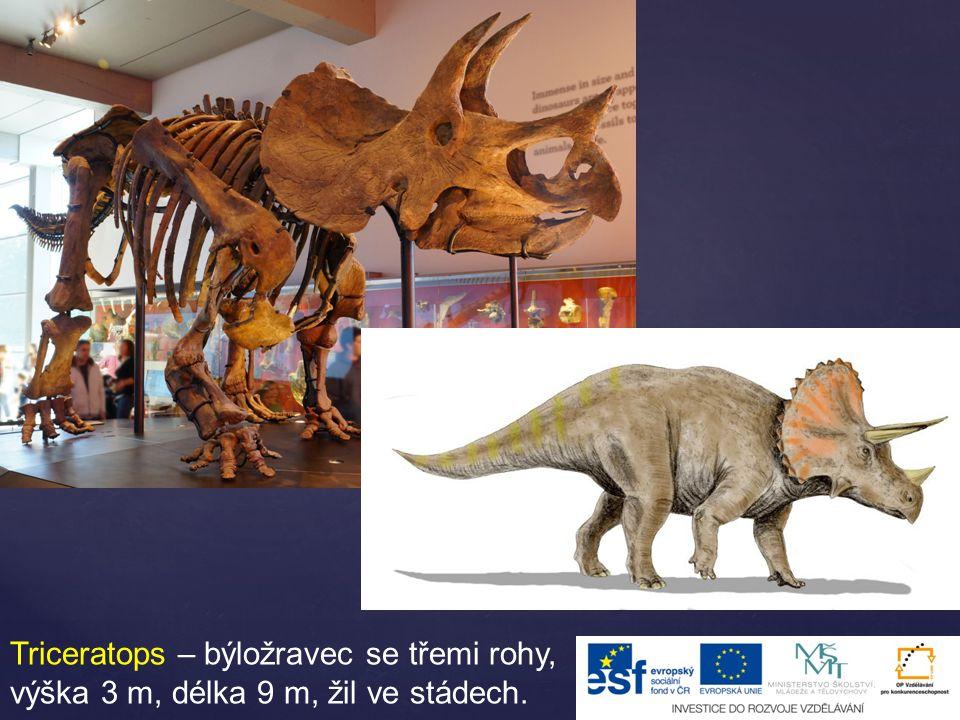 Triceratops – býložravec se třemi rohy, výška 3 m, délka 9 m, žil ve stádech.