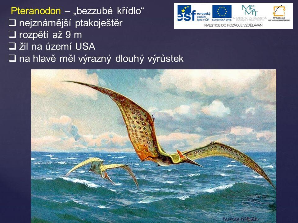 """Pteranodon – """"bezzubé křídlo"""