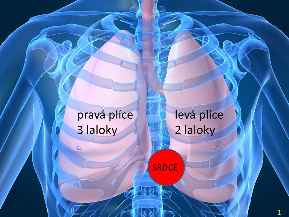 pravá plíce 3 laloky levá plíce 2 laloky SRDCE 1
