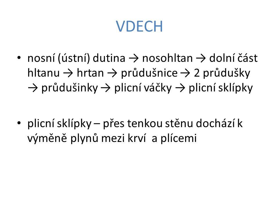 VDECH nosní (ústní) dutina → nosohltan → dolní část hltanu → hrtan → průdušnice → 2 průdušky → průdušinky → plicní váčky → plicní sklípky.