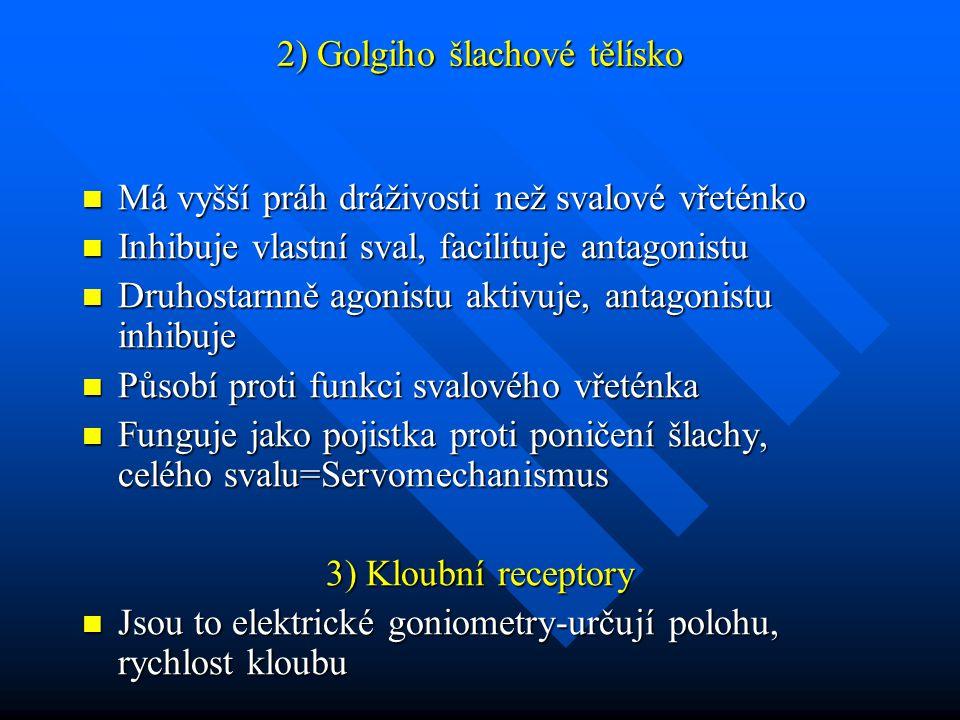 2) Golgiho šlachové tělísko