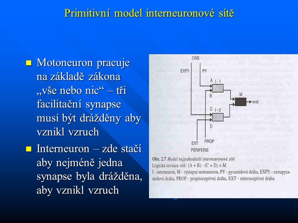 Primitivní model interneuronové sítě