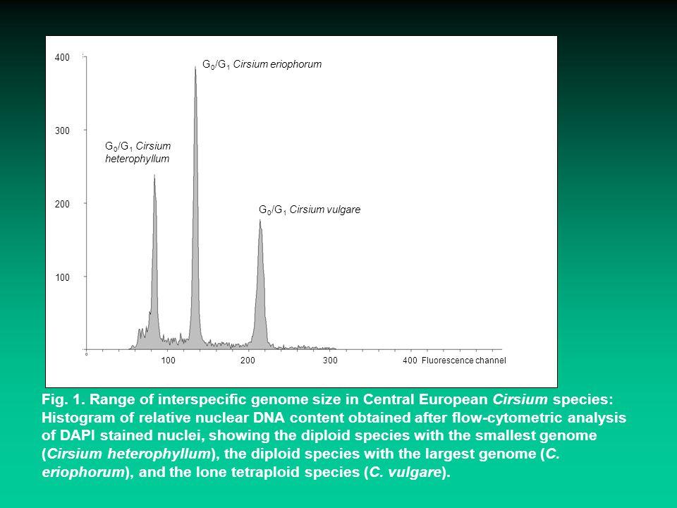G0/G1 Cirsium eriophorum