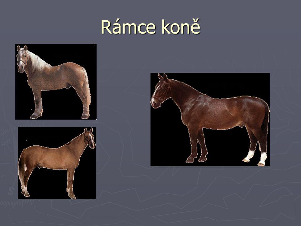 Rámce koně