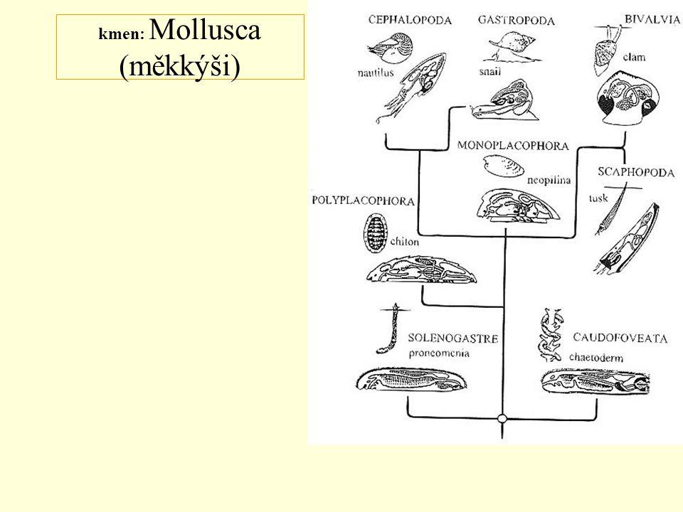 kmen: Mollusca (měkkýši)