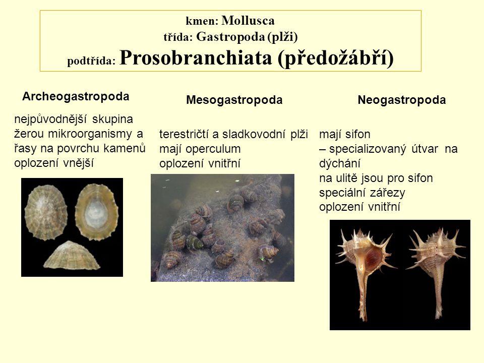 kmen: Mollusca třída: Gastropoda (plži) podtřída: Prosobranchiata (předožábří)
