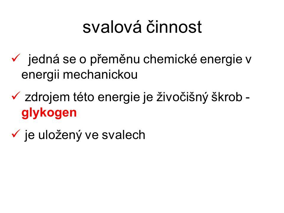 svalová činnost jedná se o přeměnu chemické energie v energii mechanickou. zdrojem této energie je živočišný škrob - glykogen.