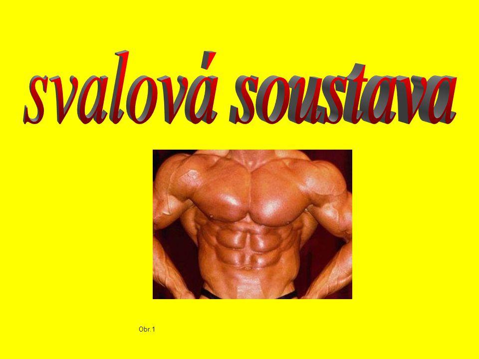 svalová soustava Obr.1