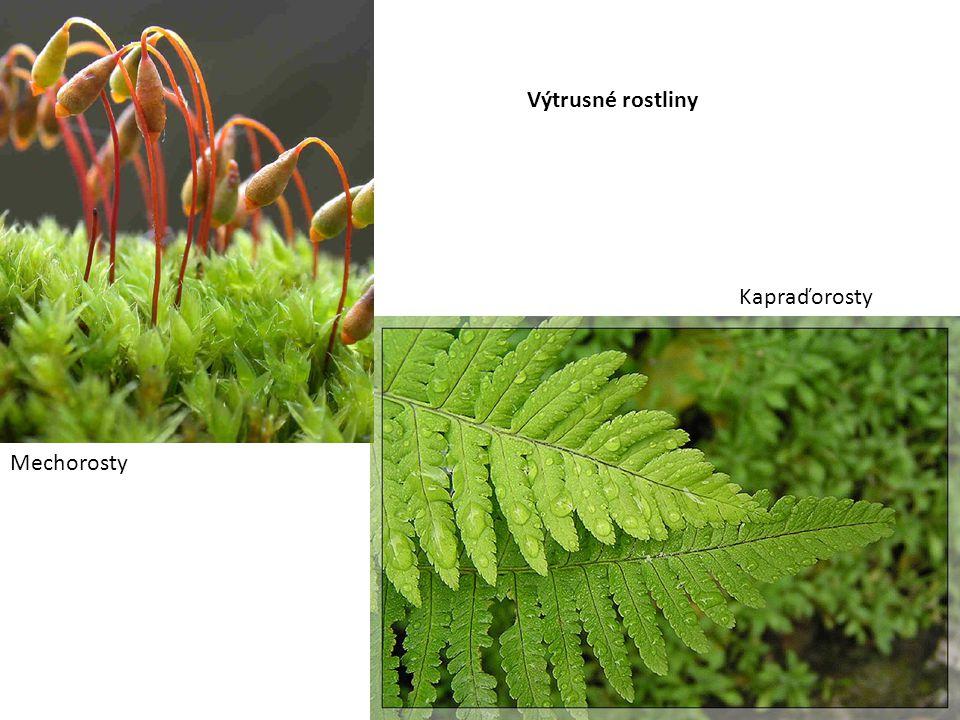 Výtrusné rostliny Kapraďorosty Mechorosty