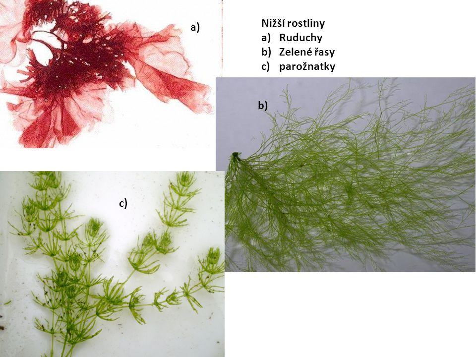 Nižší rostliny Ruduchy Zelené řasy parožnatky a) b) c)