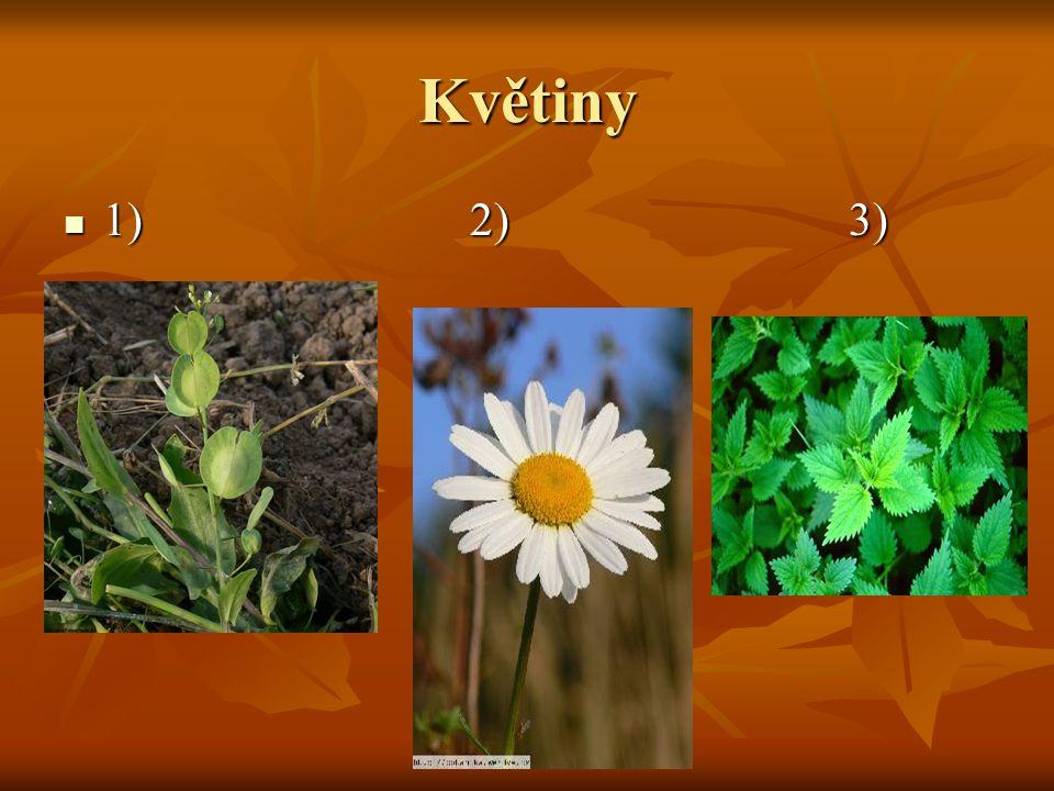 Květiny 1) 2) 3)
