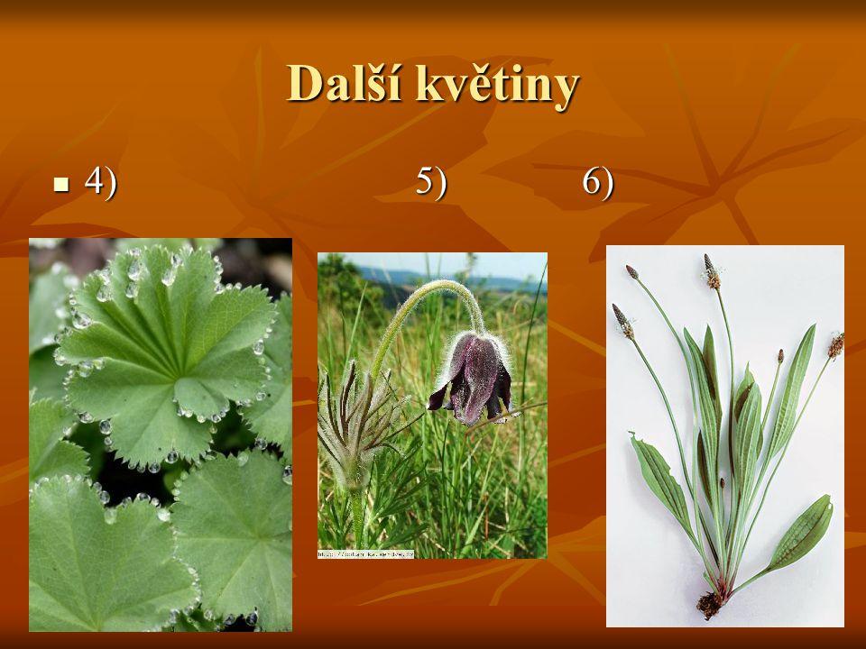 Další květiny 4) 5) 6)
