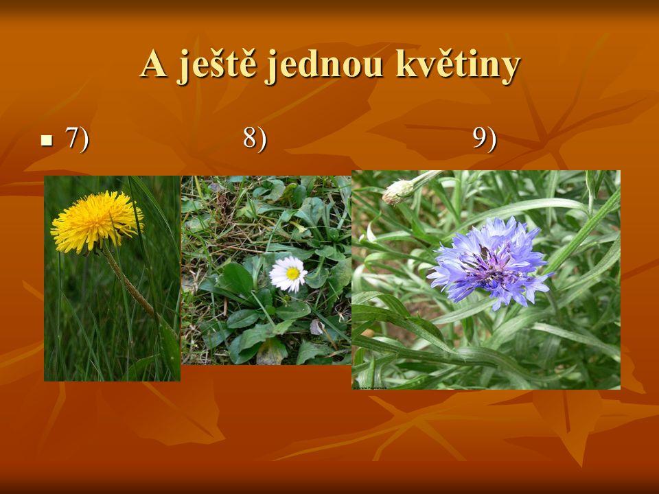 A ještě jednou květiny 7) 8) 9)