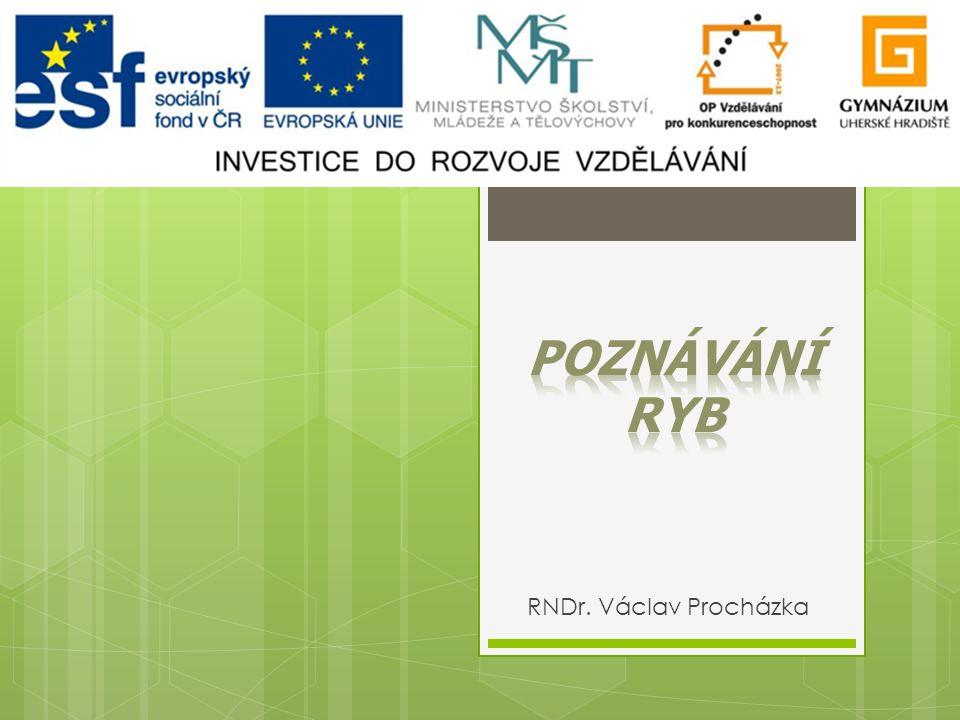 POZNÁVÁNÍ RYB RNDr. Václav Procházka