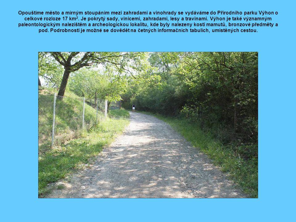 Opouštíme město a mírným stoupáním mezi zahradami a vinohrady se vydáváme do Přírodního parku Výhon o celkové rozloze 17 km2.