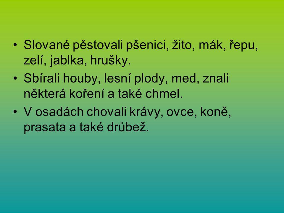Slované pěstovali pšenici, žito, mák, řepu, zelí, jablka, hrušky.