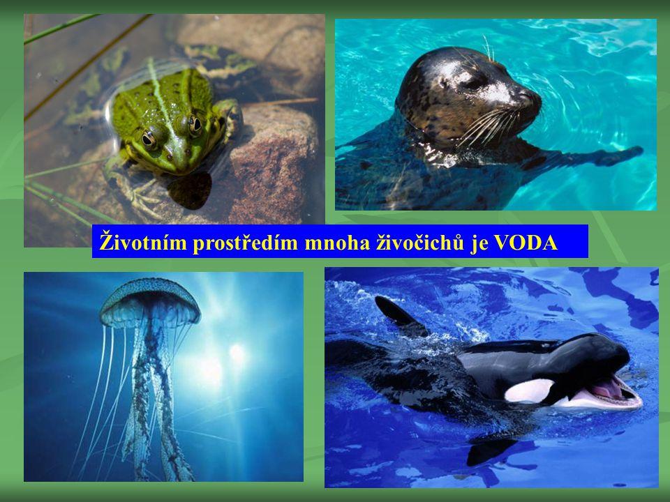 Životním prostředím mnoha živočichů je VODA