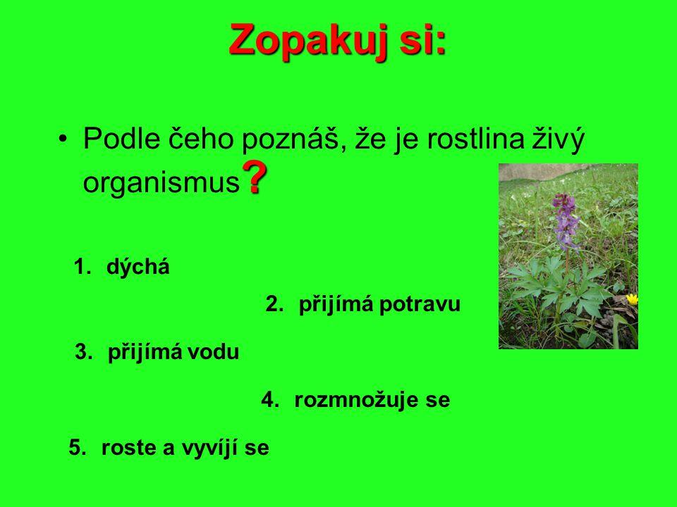 Zopakuj si: Podle čeho poznáš, že je rostlina živý organismus