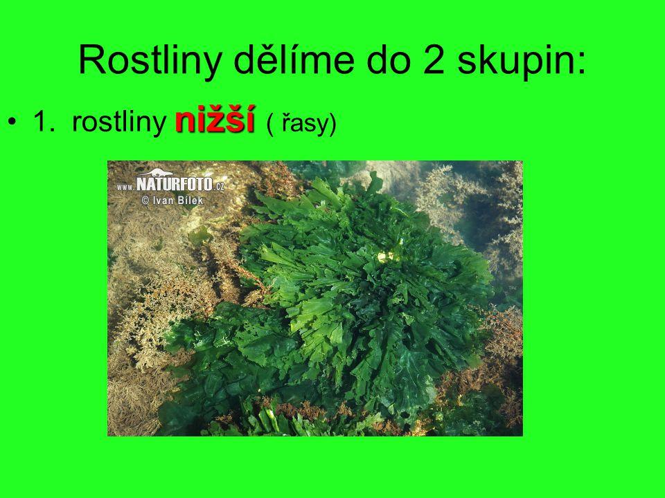 Rostliny dělíme do 2 skupin: