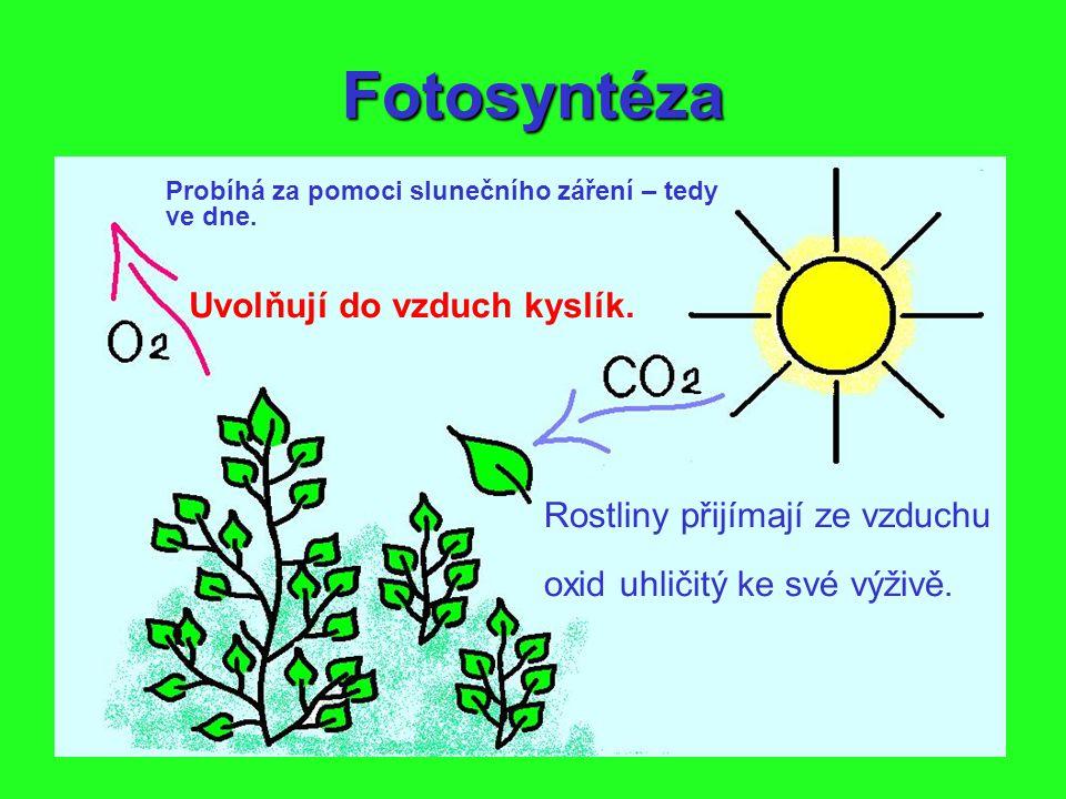 Fotosyntéza Uvolňují do vzduch kyslík. Rostliny přijímají ze vzduchu