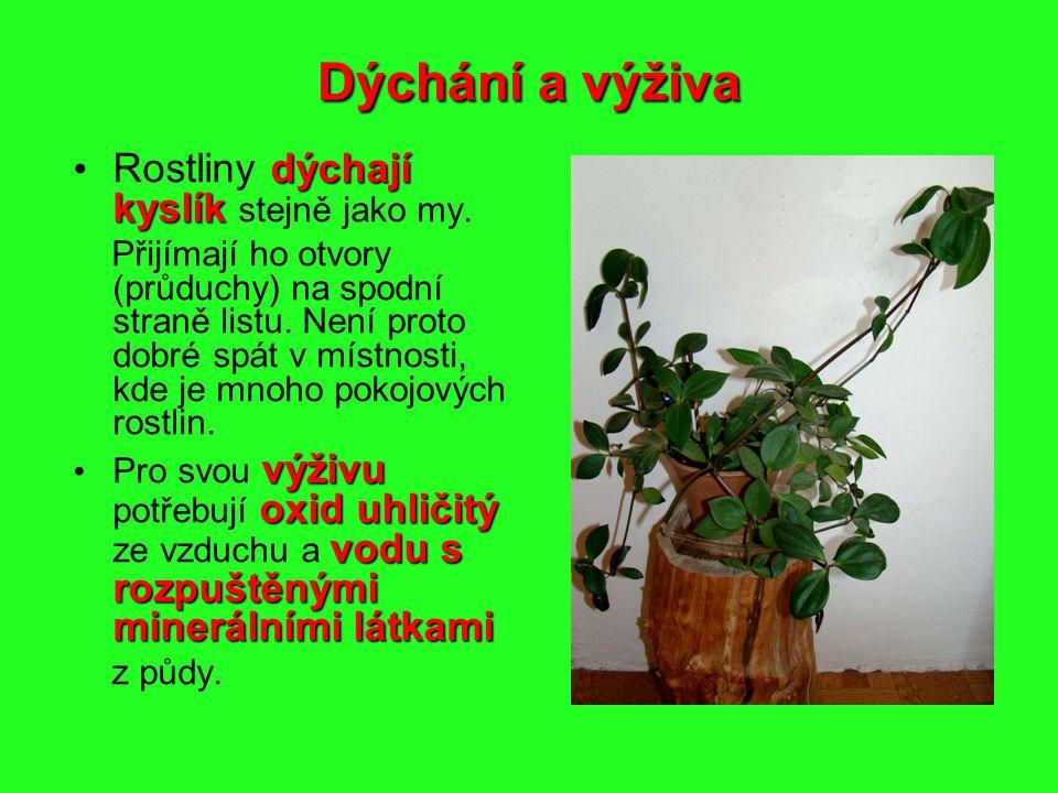 Dýchání a výživa Rostliny dýchají kyslík stejně jako my.